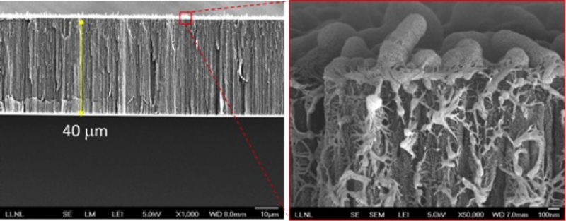 Text Box:  Figure 1. SEM images of the cross-section of a CNT-polymer composite membrane